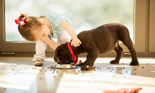 如何管教抢食物的狗狗