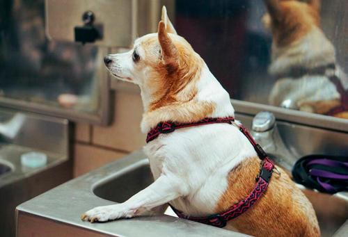 狗狗补钙的几个误区