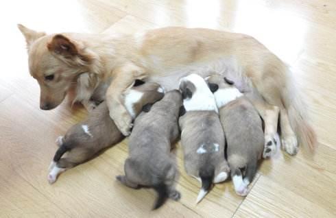 小狗吃奶粉拉稀怎么办