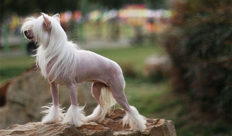 如何预防狗狗频繁掉毛脱毛