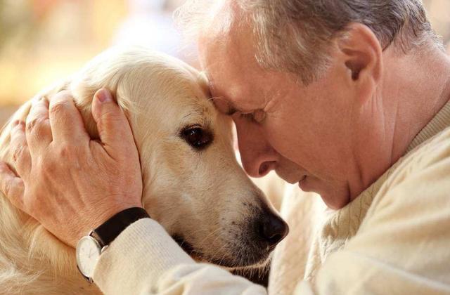 怎么给不同成长阶段的狗狗补充营养