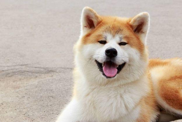 最受欢迎的工作犬,没想到还有它!