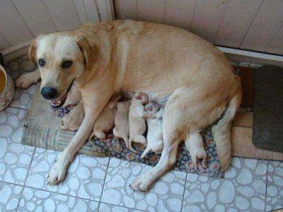 产后的狗妈妈应怎样调理身体