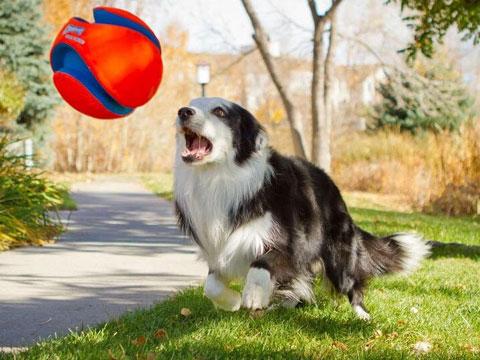 清洁剂对狗狗的危害3