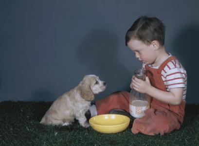 如何使用狗狗奶瓶