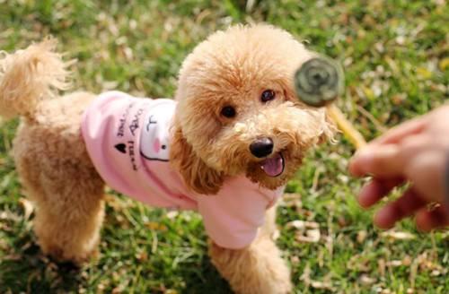 给狗狗美容需要什么工具