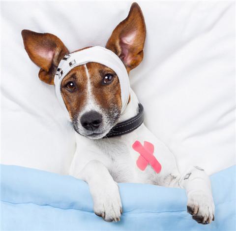 狗狗的手术前后怎样护理