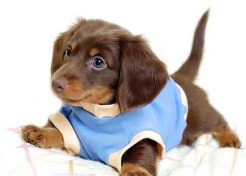 宠物狗的衣服能有多豪华,你也许都不知道