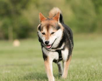 如何从狗狗舌头判断健康状态