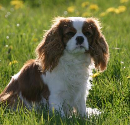 保护宠物狗狗的视力有什么技巧