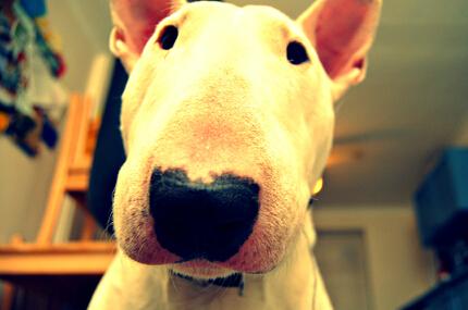 宠物犬肠胃健康会有哪些问题