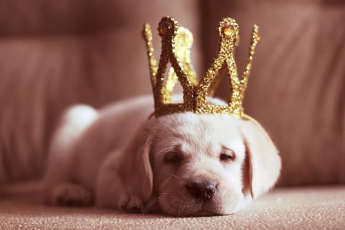 宠物狗有通病?是真的!