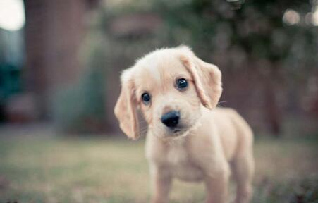如何给小狗喂食营养膏,这三种方法来帮你