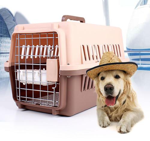 你以为养宠物狗很容易,其实这些必需品可少不了