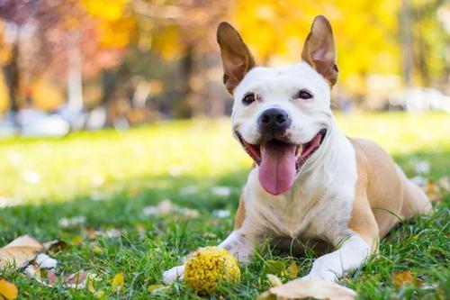 狗狗日常居家用品有哪些东西