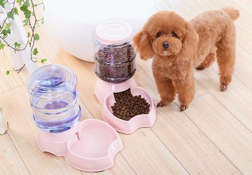 宠物狗饲养有讲究,宠物狗的饲养方法分享