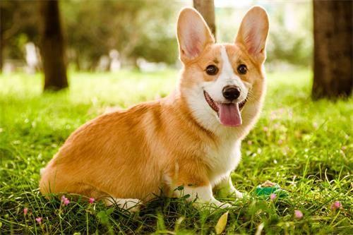 狗狗毛发护理,狗狗吃什么对毛发的颜色好