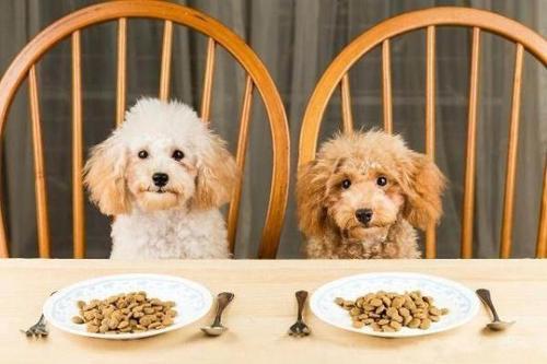 特别简单的狗狗营养餐怎么做