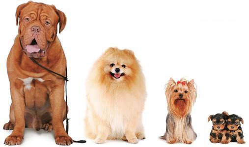 狗狗每天究竟需要补充哪些养分