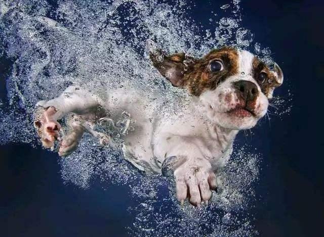 狗狗误喝海水后的急救方法