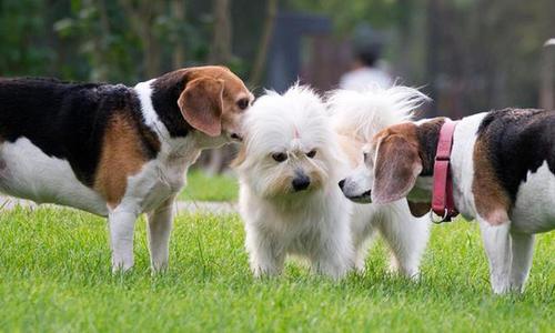 如何向家里的老狗介绍新伙伴