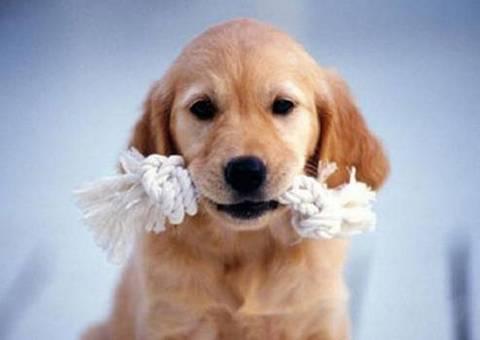 """-14个月龄狗狗的发育特征"""""""