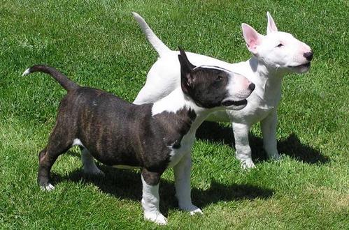 养两个狗好吗,养两个狗需要注意什么