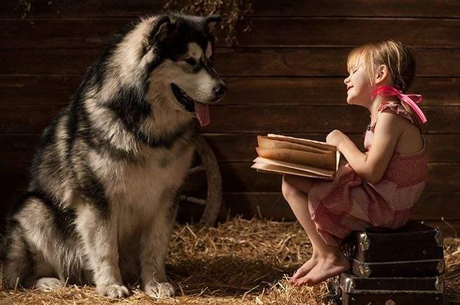 不适合孩子饲养的宠物狗有哪些