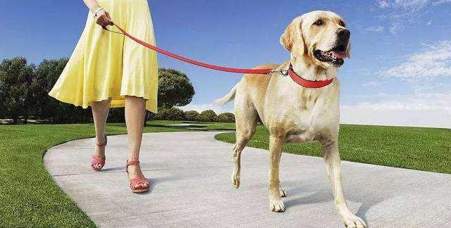 遛狗时让狗狗在后面