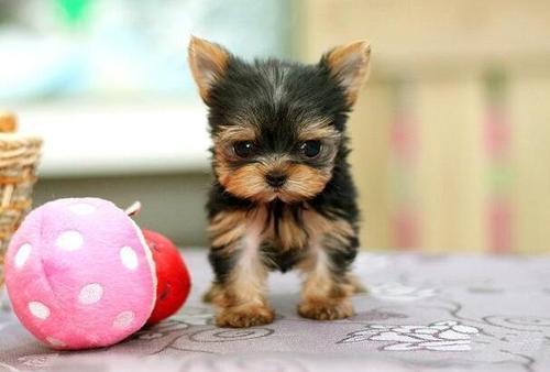 刚出生幼犬饲养需要注意哪些